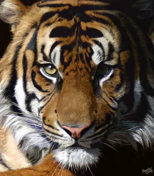 why tigers are awesome 005 The Eye of the Tiger   Awesome Tiger Art & Photography