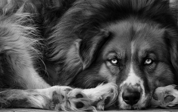 great dog photography 019 Mans Best Friend   Dogs in Photography