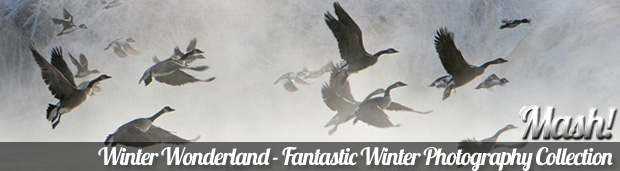 fantastic winter photography collection Winter Wonderland   Fantastic Winter Photography Gallery