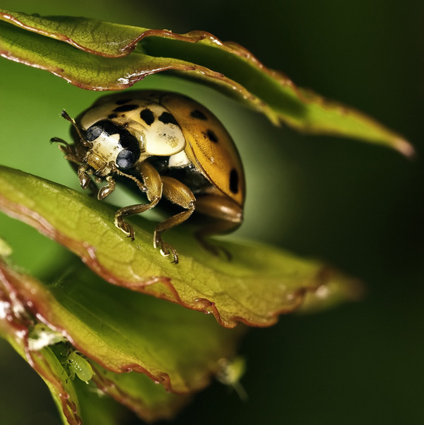 insect photography 021 The Best of Photos of the Week 2010