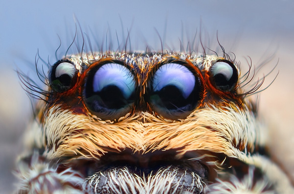 insect photography 31 Creepy Crawlies Up Close   Insect & Spider Photography