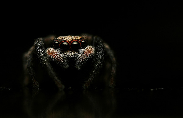 insect photography 32 Creepy Crawlies Up Close   Insect & Spider Photography