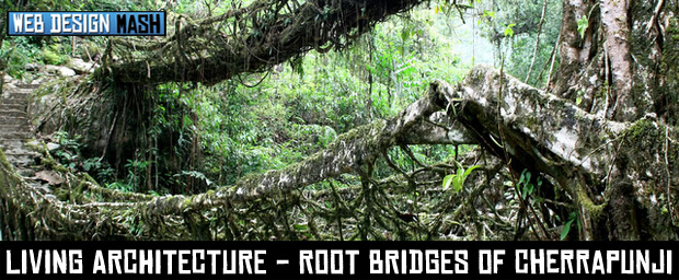 living architecture Amazing Living Architecture   Root Bridges of Cherrapunji