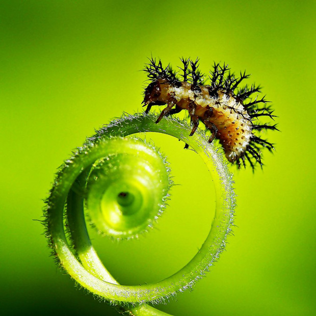 macro photography 39 World in Close up   Amazing Macrophotography Collection