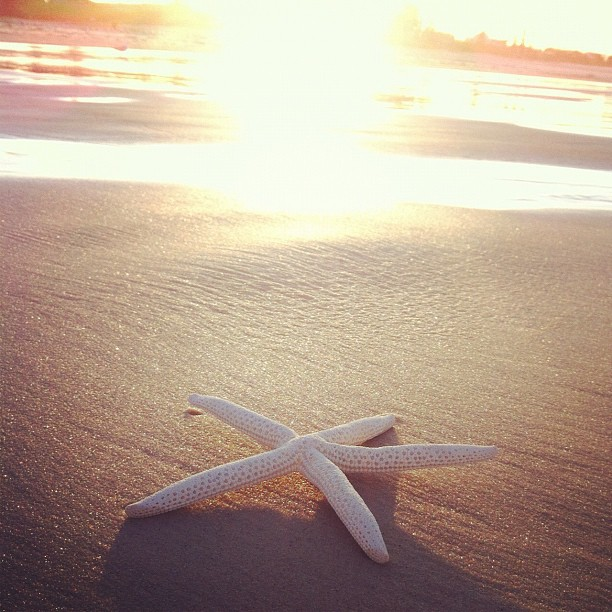 Facinating Pictures of Starfish