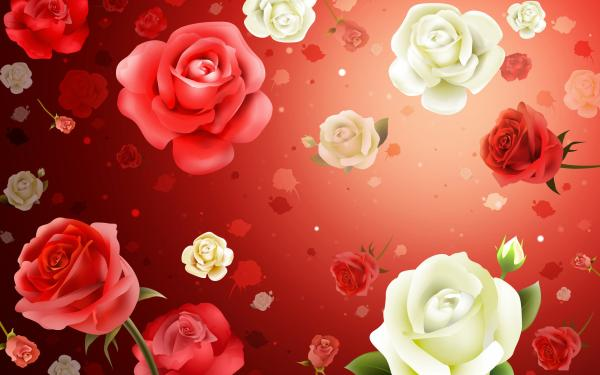Red and white roses2 24 Incredibly Beautiful Valentines Day Desktop Wallpapers